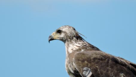 Abierta la inscripción para la charla sobre conservación de aves y sus ambientes