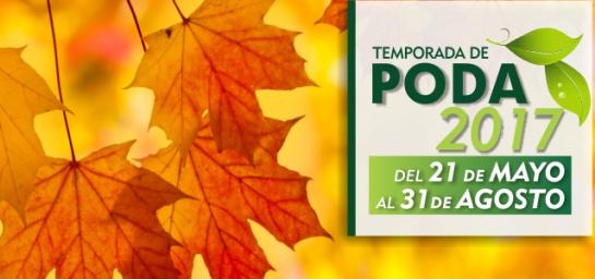 TEMPORADA DE PODA