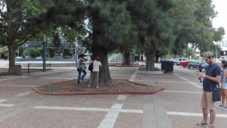 Estudiantes realizaron pasantía en arbolado urbano en la ciudad