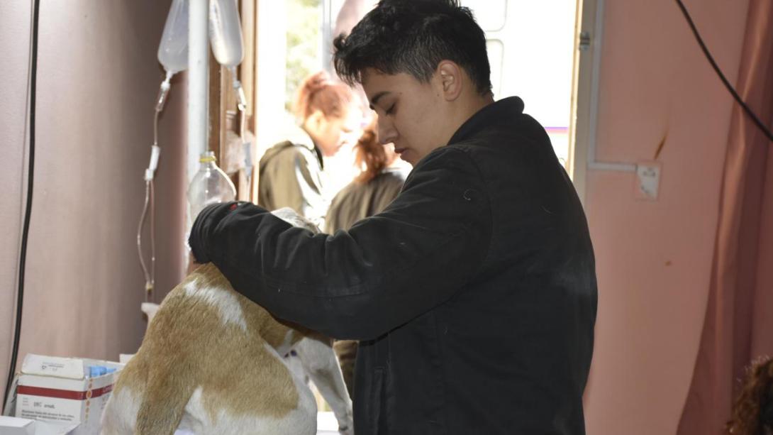 Campaña de castración en barrio El Molino