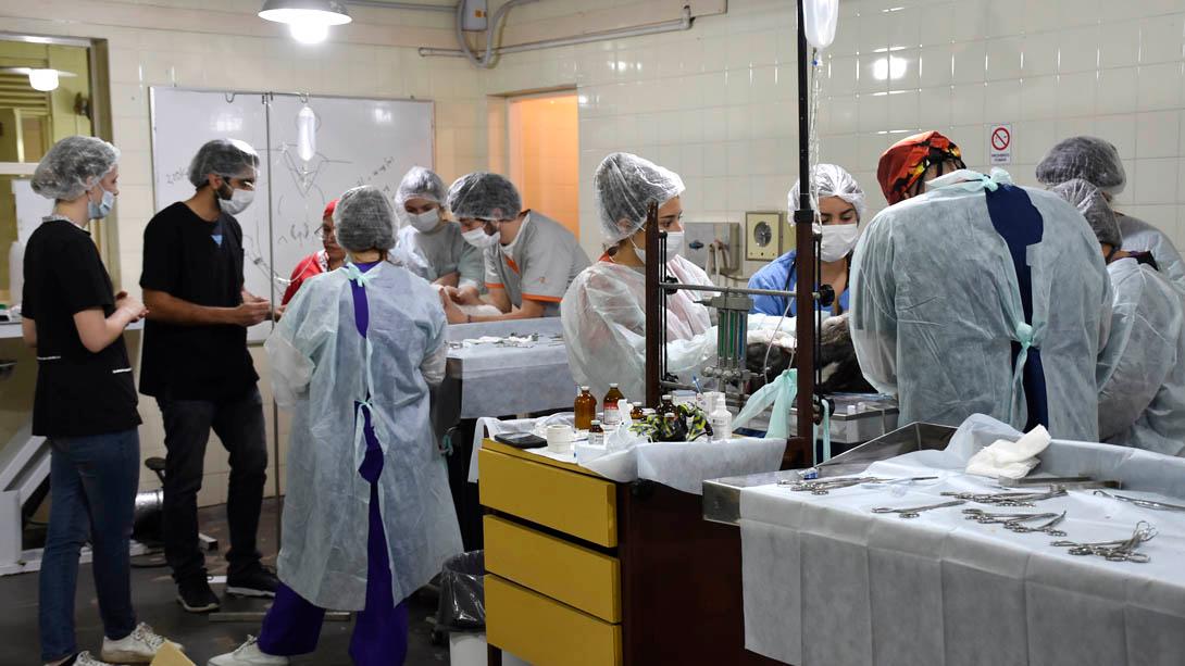 Comenzó la campaña de castración en la Facultad de Ciencias Veterinarias