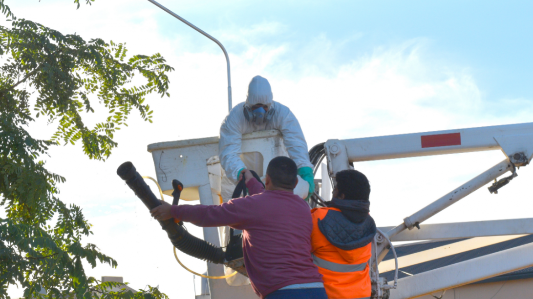 Extrajeron enjambres de camoatíes en barrio Federal