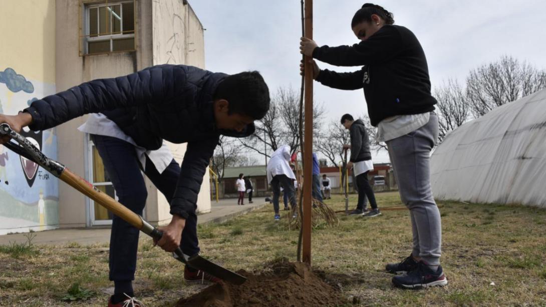 Semana del árbol: Jornada de plantación de árboles en instituciones educativas