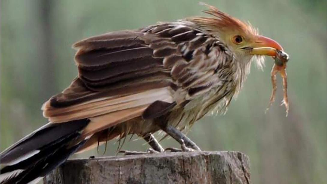 Realizarán un nuevo avistaje de aves y una muestra en el Vagón de Turismo